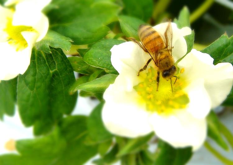 熊本牛嶋養蜂場の蜂蜜